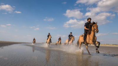 Gallop in the tarps of the Bay of Somme with the Henson horses